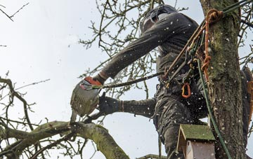 the process of removing dead wood from Combe Raleigh trees