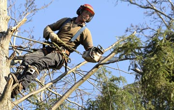 hiring experienced Combe Raleigh tree surgeons