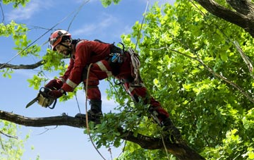 find trusted rated Combe Raleigh tree surgeons in Devon