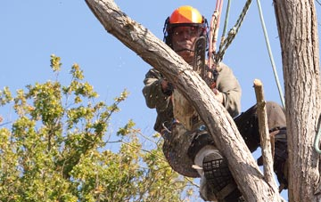 finding qualified Combe Raleigh tree surgeons