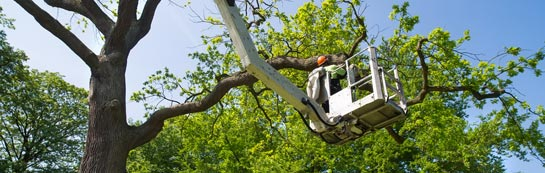 Combe Raleigh tree surgery services