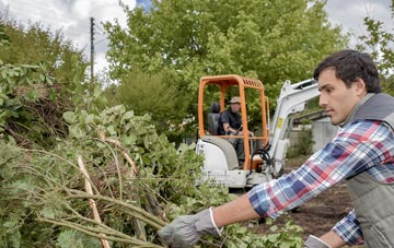Combe Raleigh tree removal costs