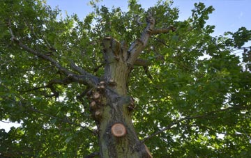 what is Combe Raleigh tree surgery?