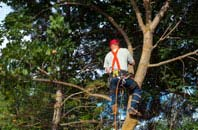 Combe Raleigh tree crown reduction services