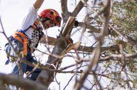 trusted Devon tree dead-wooding services
