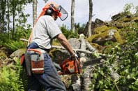 Combe Raleigh tree removal services