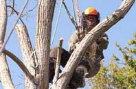 Combe Raleigh tree surgeon services