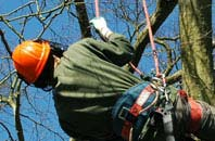free Combe Raleigh tree surgeon quotes